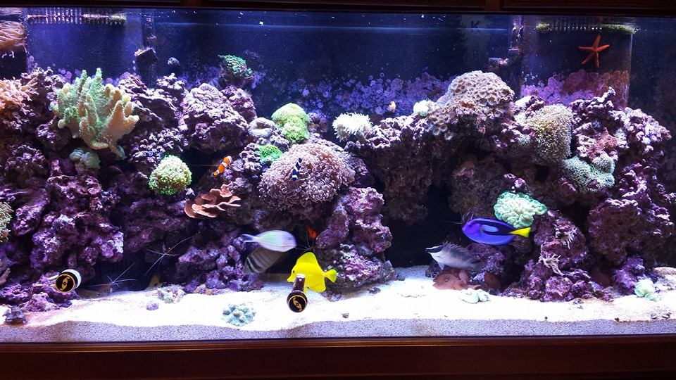 The world famous fish tank at deane company for Connecting fish tanks